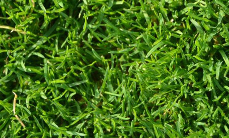 18 Vorteile für Rasendünger auf Malzkeimbasis